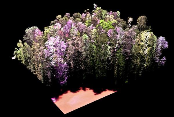 CAO-3Dforest-TAM06-Peru-DSM-1