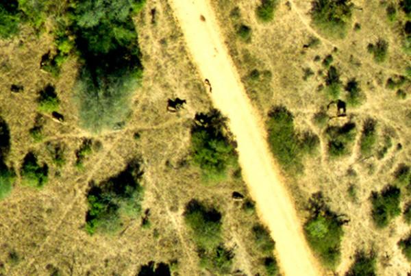 CAO-Giraffe-KNP-SA