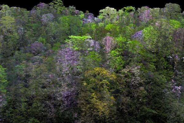 CAO-RainforestCanopy-CBL-Peru-DSM-RGB-2